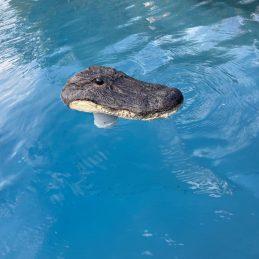 Chlorinateur alligator 2