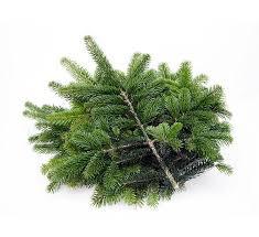 Fagot branches 2