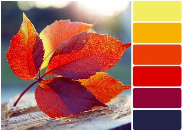 couleur-automnal